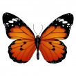 Vector butterfly — Stock Vector #27559259