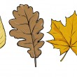 Vector yellow leaves - poplar, oak, maple — Stock Vector