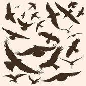 Vector silhouettes of birds — Stock Vector
