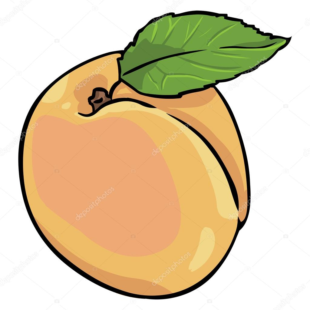 Cartoon Apricot