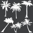 Vector set of  white palms silhouettes  — Stock Vector