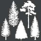 Vector set of white coniferous trees silhouettes — Stock Vector