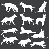 Vector set of white dogs silhouettes — Stock Vector