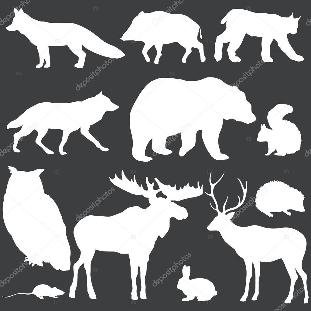 向量集的白色的森林动物剪影