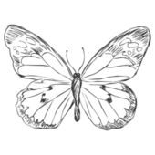 Vector sketch illustration - butterfly — Vettoriale Stock
