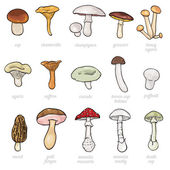 Vector set of cartoon illustration - mushrooms — Stock Vector