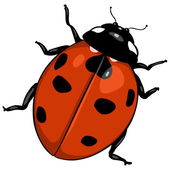 Vector cartoon ladybug — Stock Vector