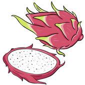 Vektor tecknad draken frukt — Stockvektor