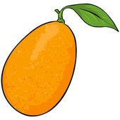 Vector Cartoon Kumquat — Stock Vector