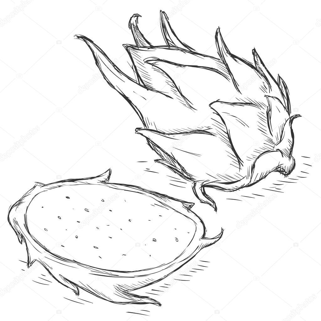 Plan Sketch Vector Sketch Dragon Fruit Stock Vector 169 Nikiteev 45670571