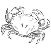 Crab Sketch — Stock Vector