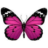 Mariposa de dibujos animados — Vector de stock
