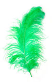 Green Feather of an ostrich — Stock Photo