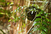 Hanging planter in garden — Stock Photo