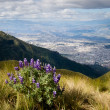 View of Quito from the top of the Teleferico on Mt. Pichincha. — Stock Photo