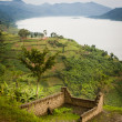 Stock Photo: Lakeside ruins, farms in Rwanda.