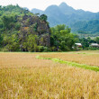 Tourist cycles through fields and rice paddies, Mai Chau, Vietnam. — Stock Photo #37559057