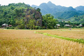 Tourist cycles through fields and rice paddies, Mai Chau, Vietnam. — Stock Photo