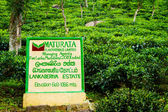 Sign for Lankaberiya Estate tea plantation. — Stockfoto