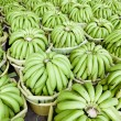 Rows of bananas — Stock Photo