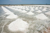 Heap of sea salt in a field prepared for harvest — Stock Photo