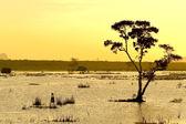 Sunset on water — Stock Photo