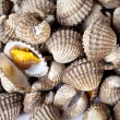 Steamed cockles. — Foto Stock