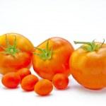 Tomato — Stock Photo #35151519