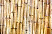 Bamboo fence background — Stock Photo