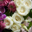 Stock Photo: Close up of white roses