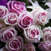Purple rose bouquet — Stock Photo