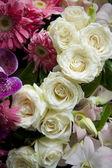 Close up van witte rozen — Stockfoto