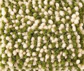 Textura de la tela verde — Foto de Stock