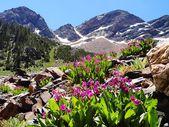 Mountain serenity — Stock Photo