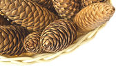 Large fir cones on a white background — Stock Photo
