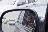 鏡の中の小さな犬の反射 — ストック写真