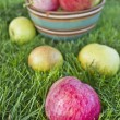 Apples in a bowl on the grass — Stock Photo