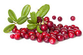 Ripe cranberries — Stock Photo