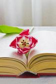 Tulip and open book — Stockfoto