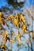 Last year's leaves — Stockfoto