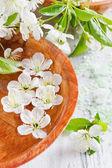 Sal cosmético e ramo desabrocham cereja — Fotografia Stock