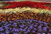 Aiuola multicolore — Foto Stock