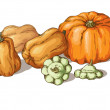 Varieties of pumpkin — Image vectorielle