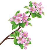 Flowering branch — Stock Vector