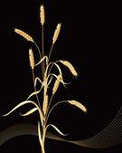 Wheat ears sheaf — Stock Vector