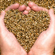 Hemp Seeds — Stock Photo #27481065