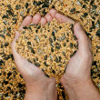 Love for bird seeds — Stock Photo