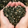 Love for sunflower seeds — Stock Photo #27575973