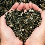 Love for sunflower seeds — Stock Photo #27575973