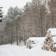 Stock Photo: Lumber in winter